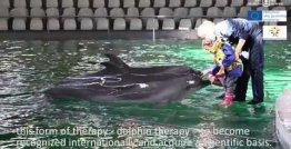 Delfinų terapija Lietuvos jūrų muziejaus delfinariume